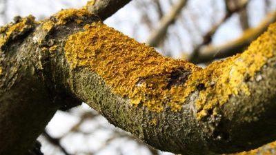 Грибковые болезни деревьев