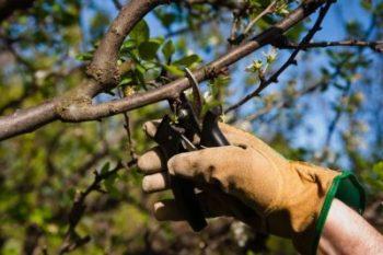 профилактика болезней деревьев