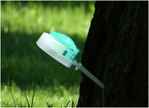 как лечить деревья прививками