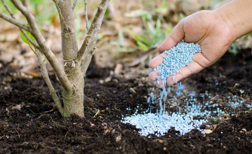Удобрения для деревьев: когда, как и какие вносить