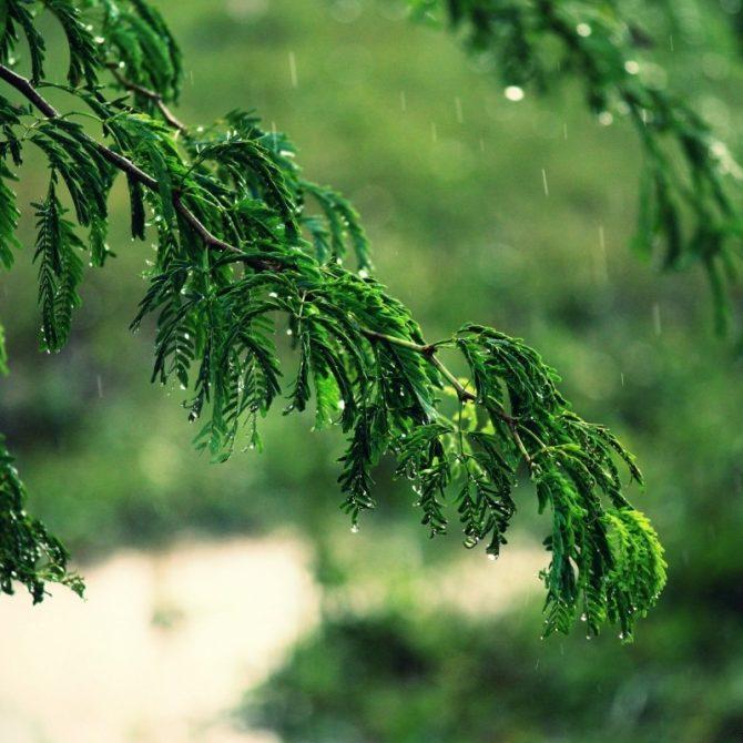 Когда ставить инъекции деревьям