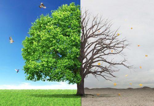 Лечение деревьев уколами